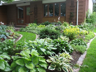 Maybe I'll just make a Hosta garden at the side of my house.