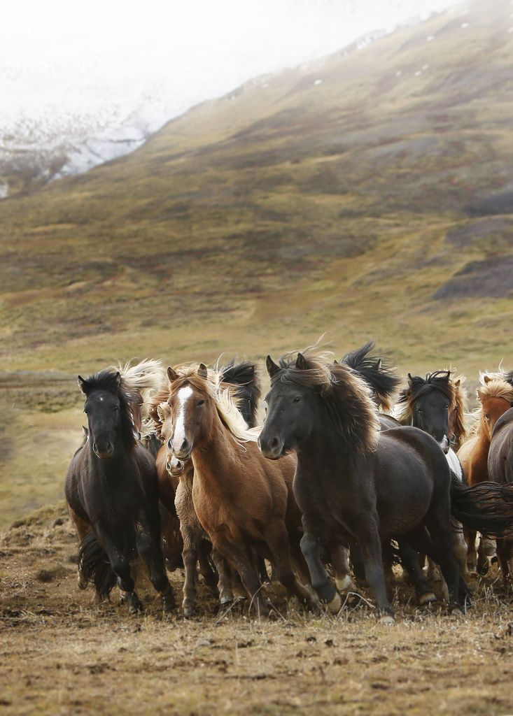 """A wild herd galloping wherever they please, for they are free.""  (Written By: Abigail Schaffner.)"