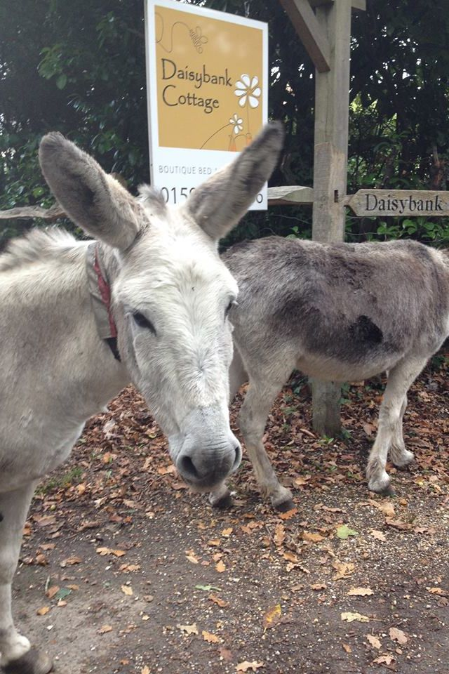 new guests! Daisybank Cottage New Forest