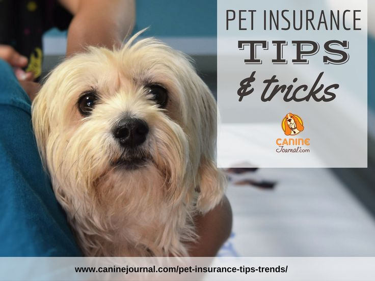 Pet Insurance Tips and Trends