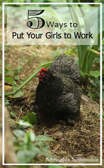 If you've got egg laying chickens, are you making them earn their keep? Sure, they give you eggs, but they can help out around the yard, too!