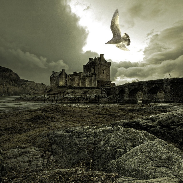 Gothic Eilean Donan Castle (maybe in this case the seagull ought to be a raven LOL)
