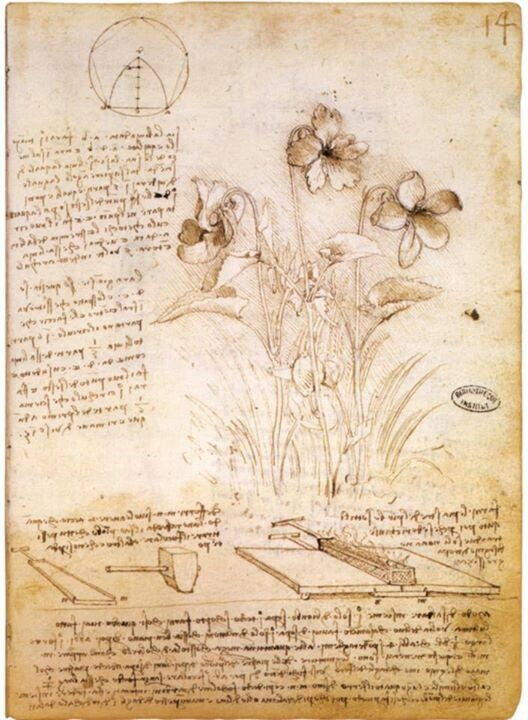 Da Vinci - violets