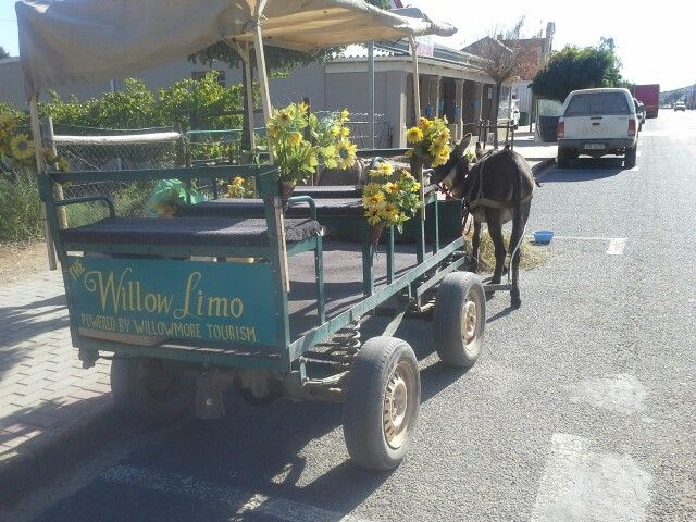 Willowmore Willow Limo