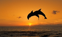 I would love to see this in a setting sun.: Life, Favorite Places, Specialist Kelly Hudler, Favorite Animal, Galveston Texas, Texas Beaches Galveston, Galveston Tx, Dolphins In Motion, Travel Specialist Kelly