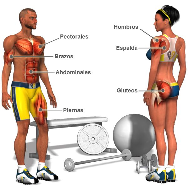 Exercises (muscles) - Ejercicios (músculos)