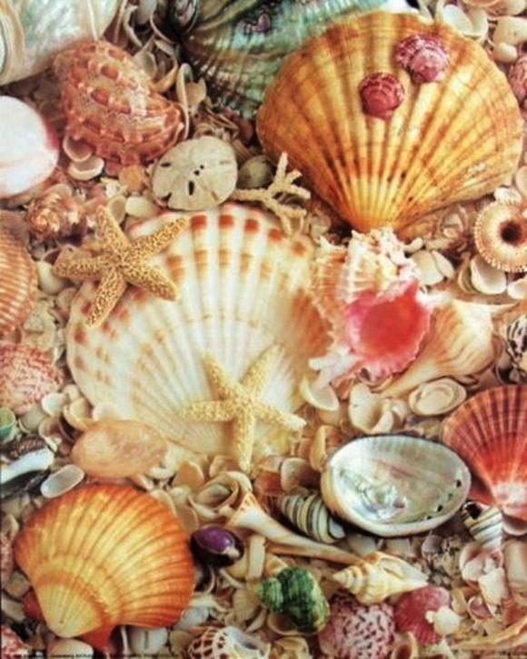 Conchas do mar tumblr google shells for 2 mid america plaza suite 1000 oakbrook terrace il 60181