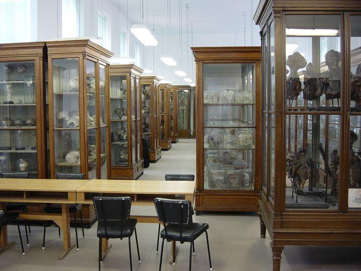 Anatómiai Múzeum | Anatómiai, Szövet- és Fejlődéstani Intézet