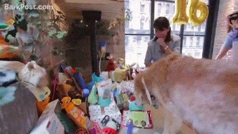 Bretange, no es un perro cualquiera, ella es la ultima conocida, que participo en las tareas de búsqueda y rescate del 11 de septiembre. El 11 de sep...