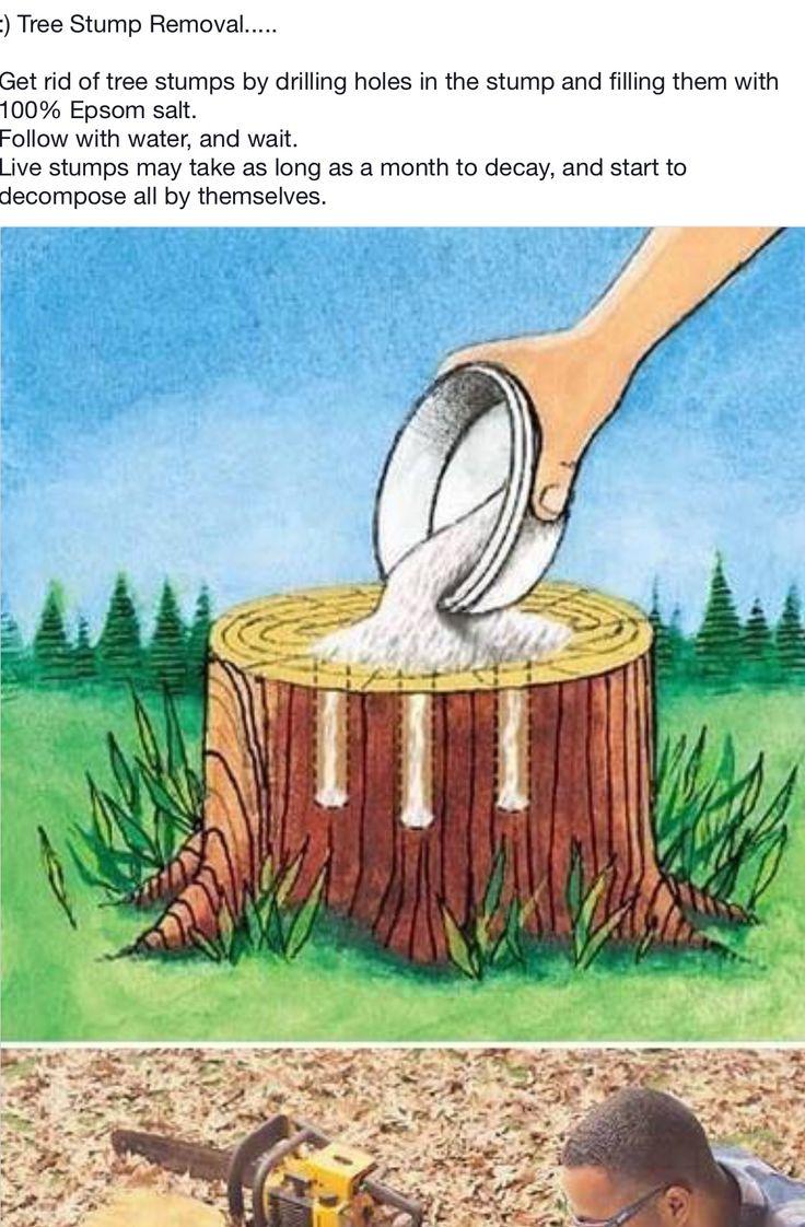 Pin by Tina Kopp on Handy Hints Stump removal, Tree