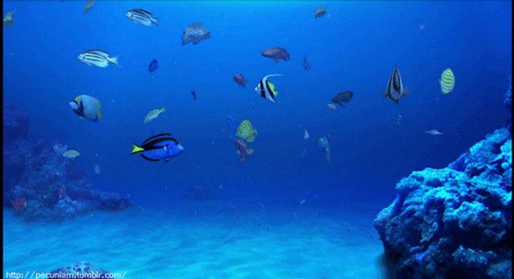 этих анимация рыба в море как