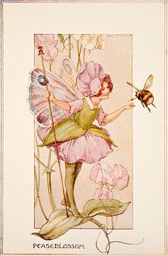 The Flower Fairies - The Pease Blossom Fairy