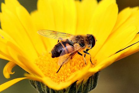 From #Bee #Pollen to Royal Jelly: Decoding the Super #Healthy Bee Foods http://www.organicauthority.com/from-bee-pollen-to-royal-jelly-decoding-the-super-healthy-bee-foods/