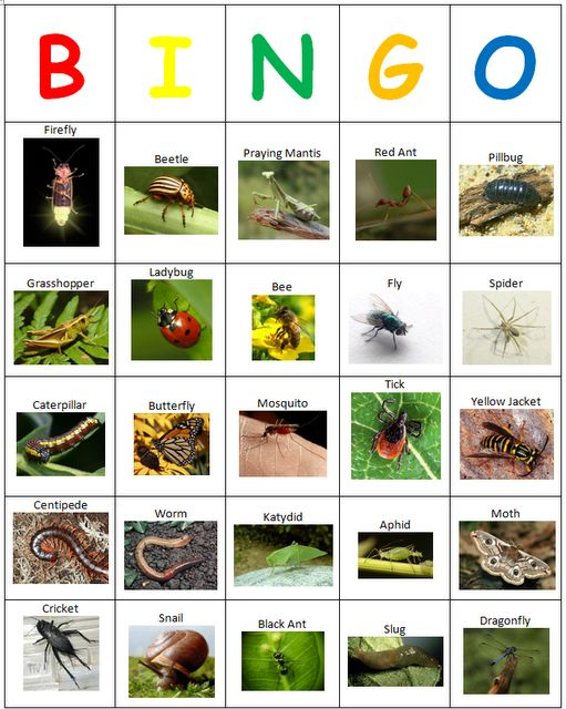 Creepy Crawly Bingo ( Use for insect week but remind children that insects have six legs and on this bingo card there are worms, etc.)