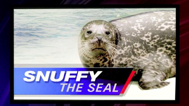 Shark Week: Who Killed Snuffy the Seal? : Video : Discovery Channel