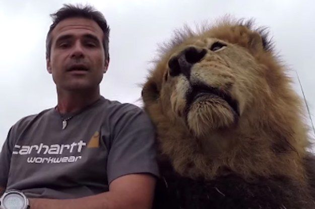 This Guy Just Wants To Film A PSA About Lions But An Adorable Lion Keeps Interrupting Him