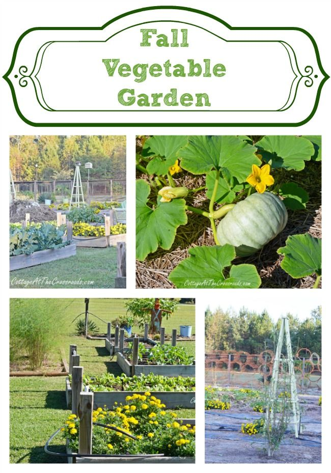 Come take a tour of our Fall Vegetable Garden! | Cottage at the Crossroads