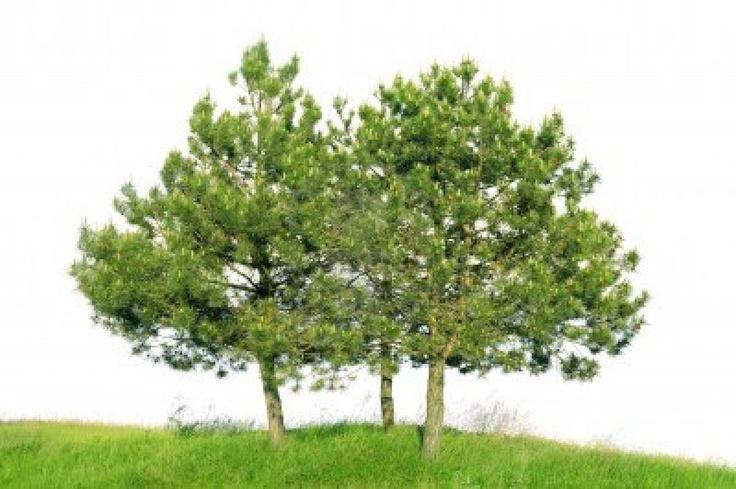 25 beste idee n over heuveltuin op pinterest tuinieren hellende tuin en voortuin landschap - Tuin hellende ...