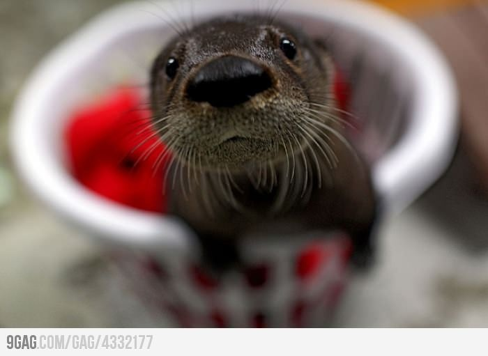 Baby Otter! He is so cute!