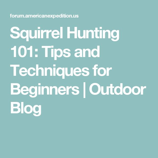 Squirrel Hunting 101: Tips and Techniques for Beginners | Outdoor Blog