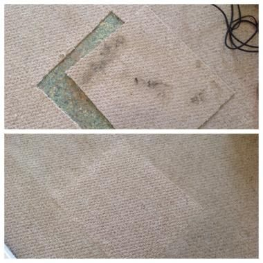 Affordable carpet cleaning  Gilbert AZ  See more  Need someone to clean  your floor carpets  Check out Scott Harper who is among the. The 25  best Affordable carpet cleaning ideas on Pinterest   Gray