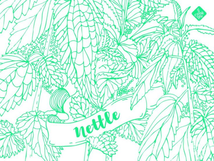 Green Nettle Smoothie — Cookillu