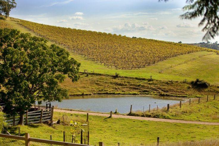 #OldHillsideHomestead #Hunter Valley #Pokolbin #Accommodation #Vineyards #Dam