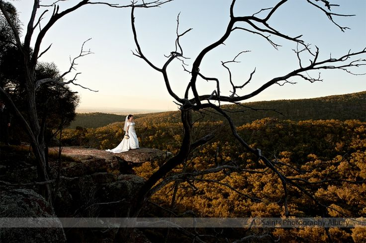 Peregrines at Table Top Mountain Weddings