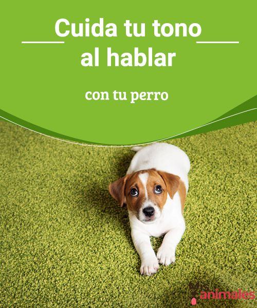 Cuida tu tono al hablar con tu perro El tono de voz es esencial en nuestra relación con nuestro perro, pues nuestro tono determinará su respuesta y actuación. Mira estos consejos. #consejos #voz #hablar #tono