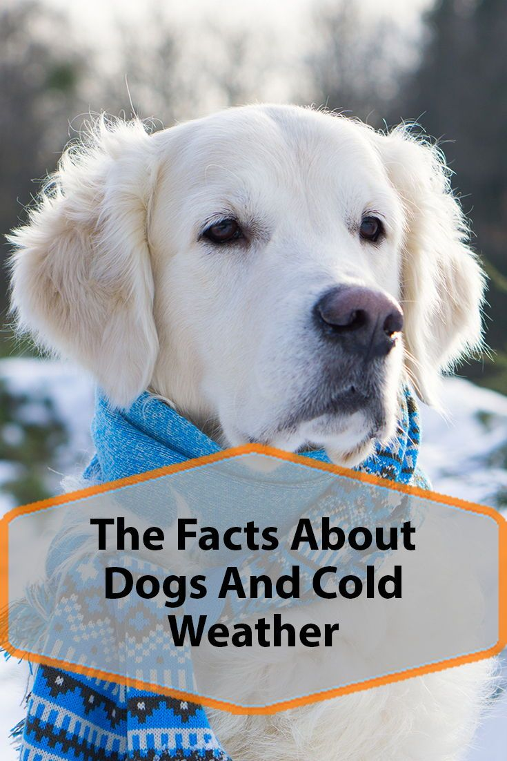 Dogs And Cold Weather Dogs Dog Facts Dog Care