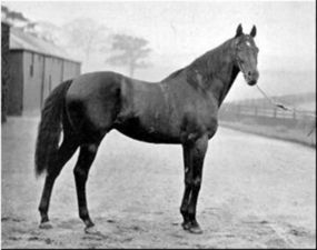 "St. Simon (Galopin X St. Angela) is widely regarded as the most outstanding racehorse of the 19th century. He was unbeaten on the track, bringing in 10 victories at distances ranging from 5 furlongs (5/8ths of a mi.) to 2 miles, 5 furlongs. He won the Ascot Gold Cup, a 2.5 mile race, by 20 lengths and so much ""horse"" left in him that he galloped another full mile before he would consent to being pulled up. He was noted as an extremely well made stallion (albeit a little too hot-headed) and…"