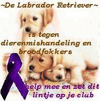 Afbeelding van http://members.chello.nl/~m.dompeling-piet/labradors_tegen_dierenmishandeling.jpg.