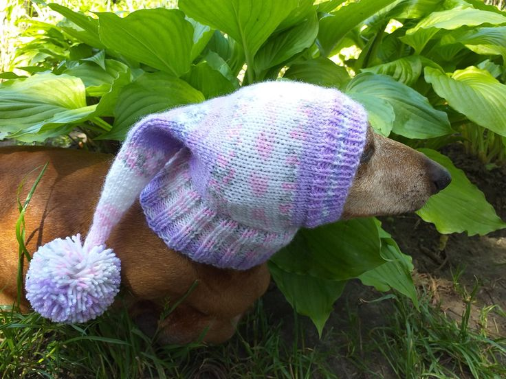 Winter knitted hat for small dog,hat for dog in 2020 Dog