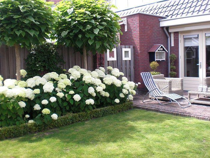 hortensia border - hier met trompetboompje. Kan ook met siergrassen ervoor en hogere pluimhortensias erachter