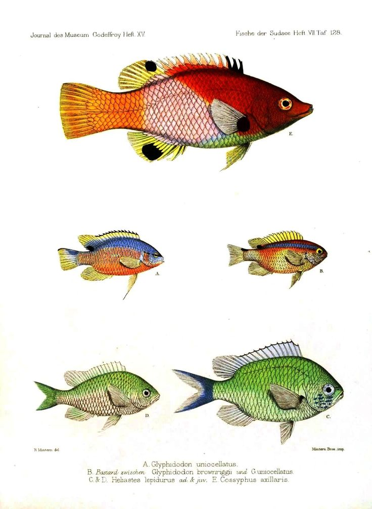 39 best Thinking About Fishing images on Pinterest ...