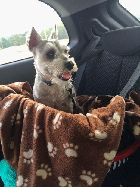 Brookstone Dog Car Seat Lookout