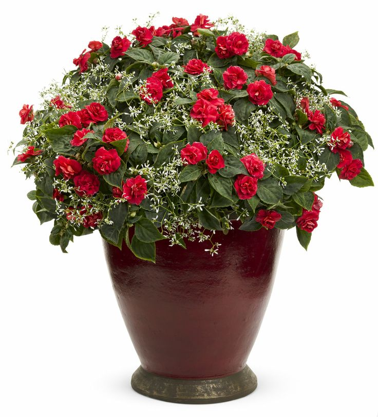 Frost Garden Pots 558 best shade containers images on pinterest shade garden i have both of these double impatiens diamond frost euphorbia flower planterscontainer workwithnaturefo
