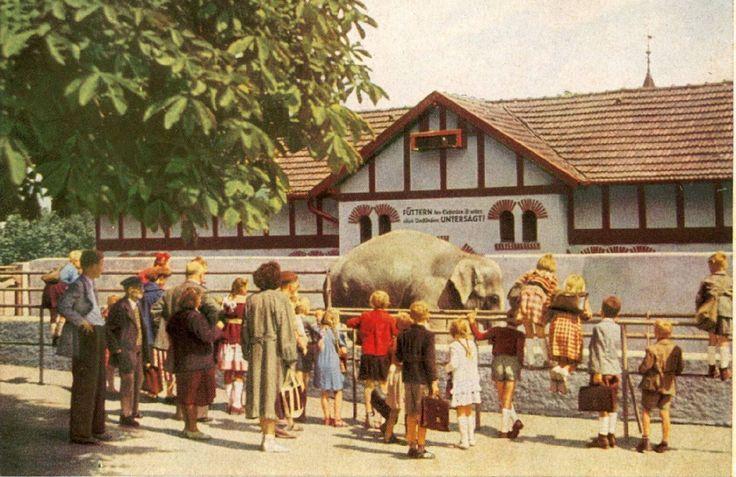 Bergzoo, Schulausflug Aus Den 60er Jahren