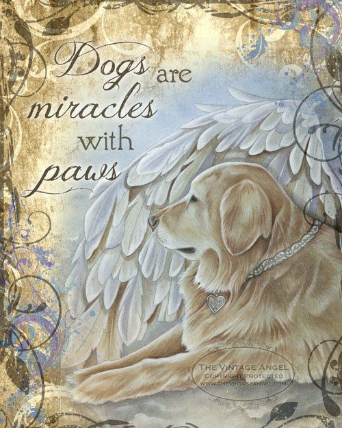 Dog Angel Quotes: 629 Best All Dogs Go To Heaven Images On Pinterest