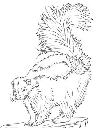 65 best Skunks images on Pinterest Skunks Animals and