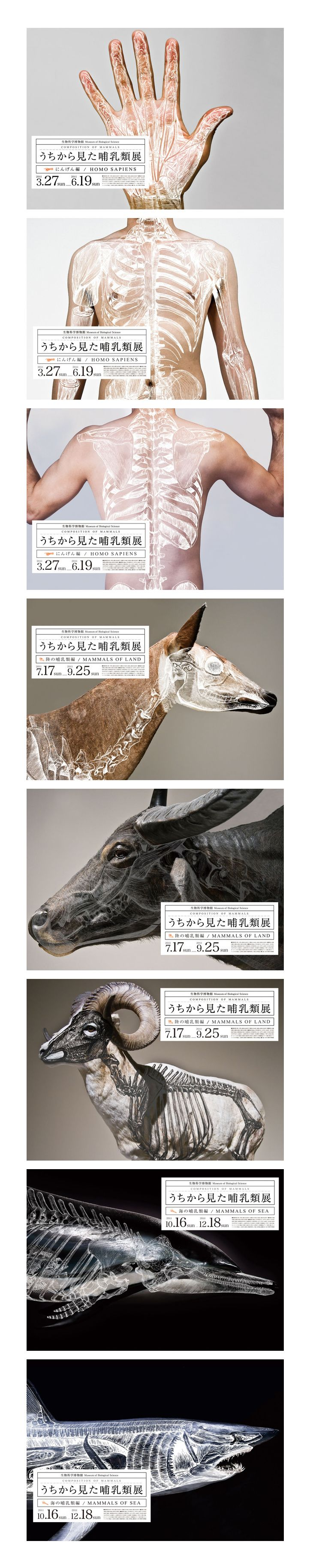 Composition of Mammals「うちから見た哺乳類展」 mock exhibition posters by Wataru Yoshida