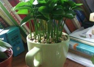 Plante sementes de limão e deixe a casa cheirosa                              …