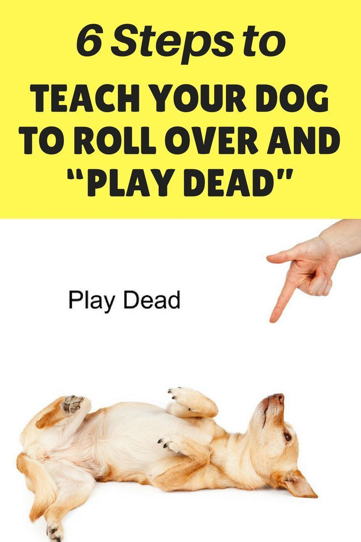 6 Steps To Teach Your Dog To Roll Over And Play Dead Dog