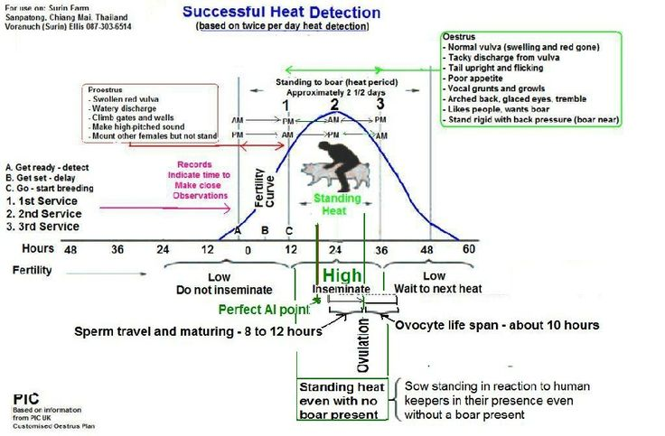 How to Reduce the Impact of Extreme Heat and Avoid Heat Stress in Pigs