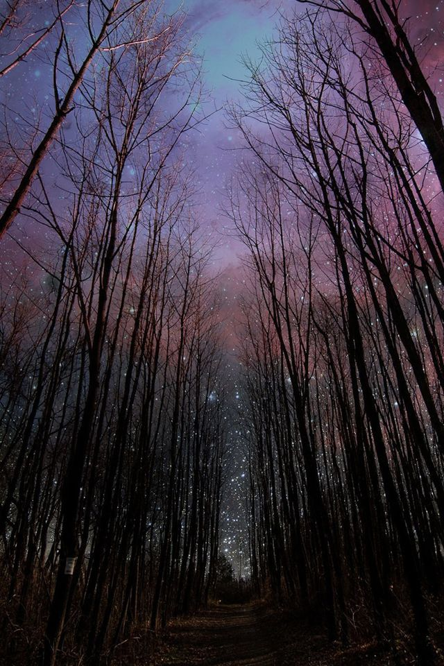 Wither Trees Towards Shiny Starry Sky iPhone 4s wallpaper