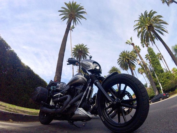 Dyna-Charlie Ross-Beverly Hills.