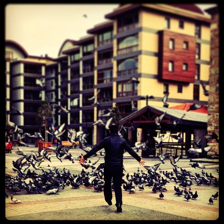 Bursa'da kuşlar