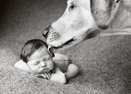 tiny baby + humongous dog ='s Erin Vey's new baby girl. | Flickr – Compartilhamento de fotos!