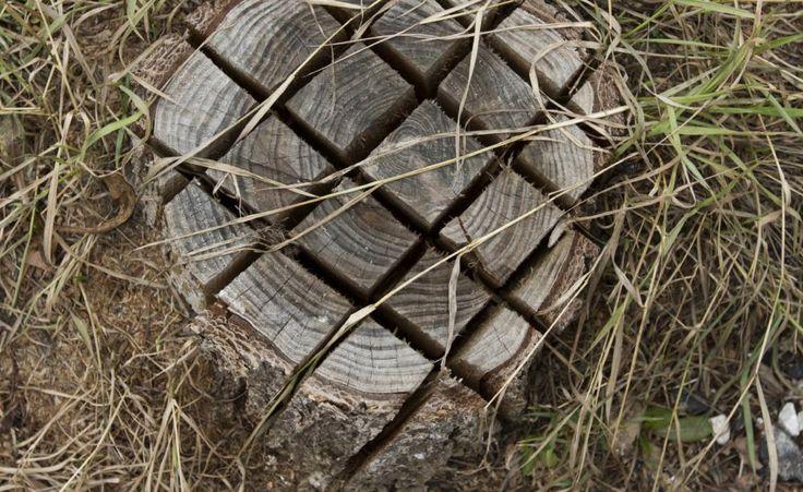 Ein Baum ist schnell gefällt, aber um einen Baumstumpf zu entfernen, braucht man viel Kraft und die richtige Technik, die passende Maschine oder einfach genügend Zeit. Wir erläutern die verschiedenen Möglichkeiten.