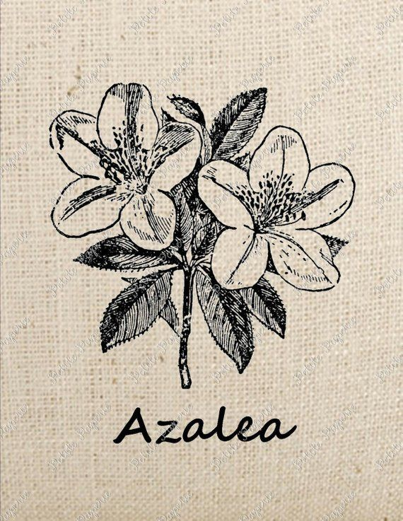 Pin By Jo Zimmerman On Mood Tats In 2020 Azalea Flower Azaleas Inspirational Tattoos